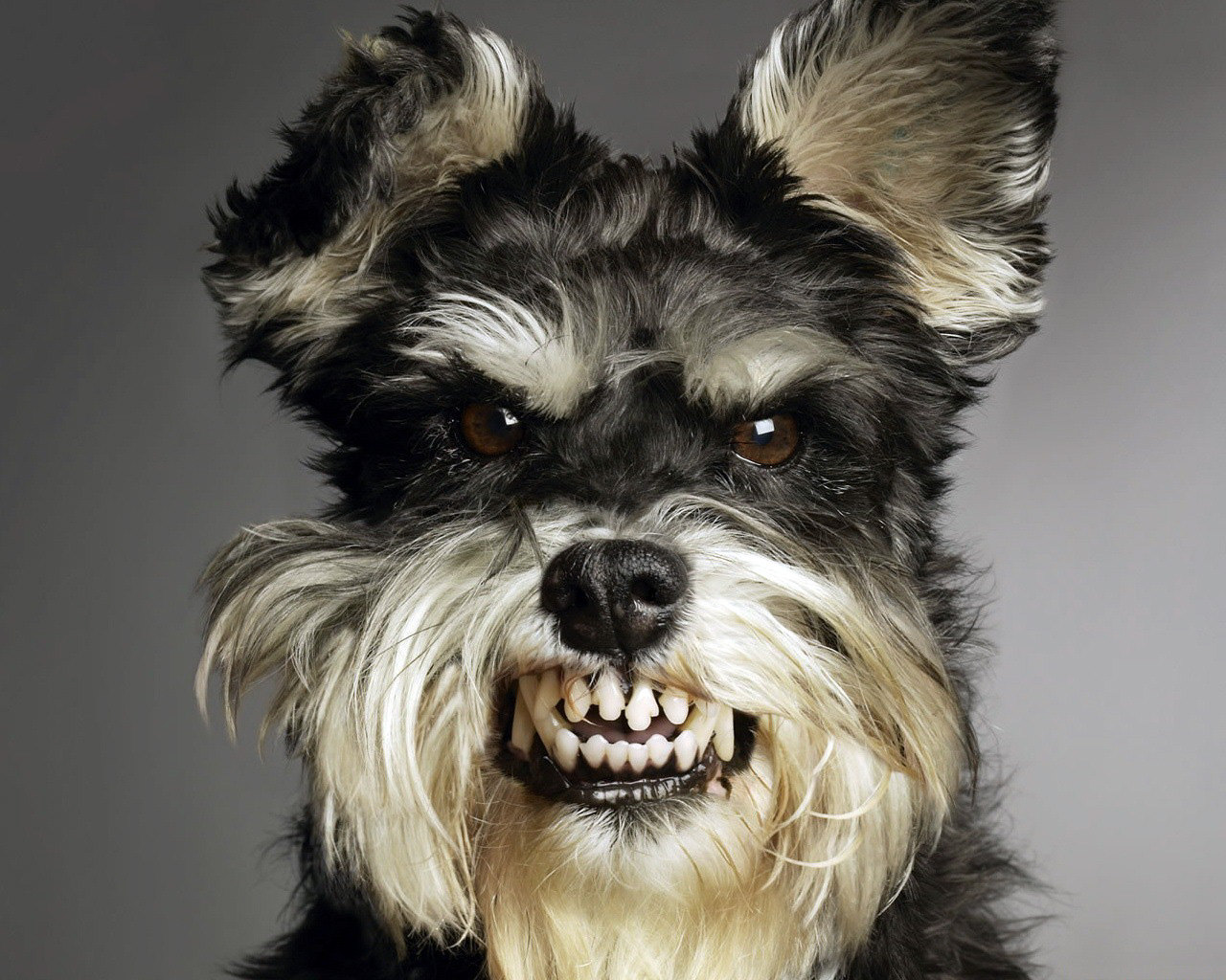 All Wallpapers Funny Dogs Wallpapers 1280x1024
