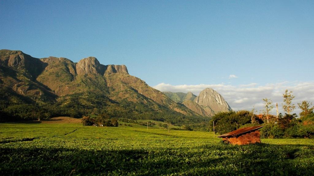 Theeplantage Aan De Voet Van Mt Mulanje Malawi Mount Mulanje 1024x576