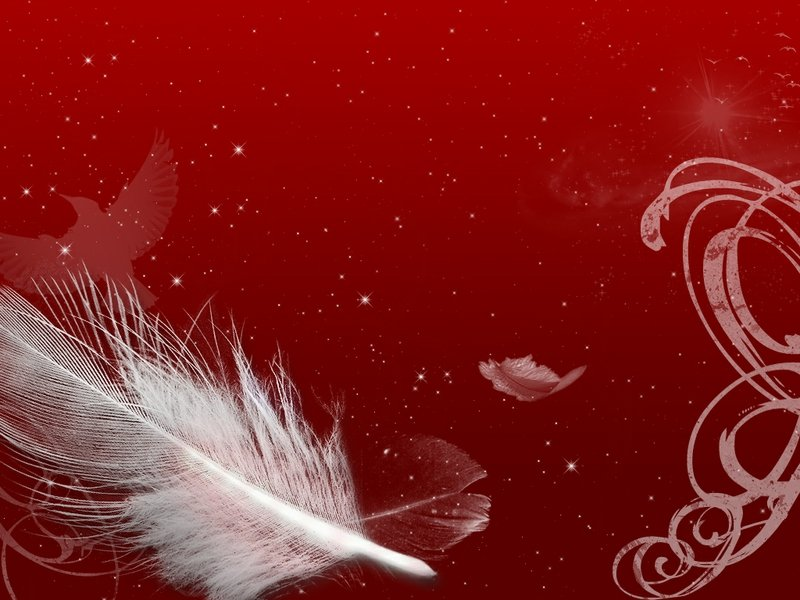 Black and red feather wallpaper Wallpaper Wide HD 800x600