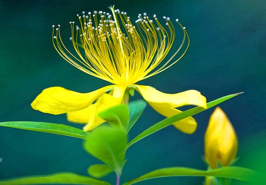 HD Wallpapers 1080p Widescreen Flowers 1024x712