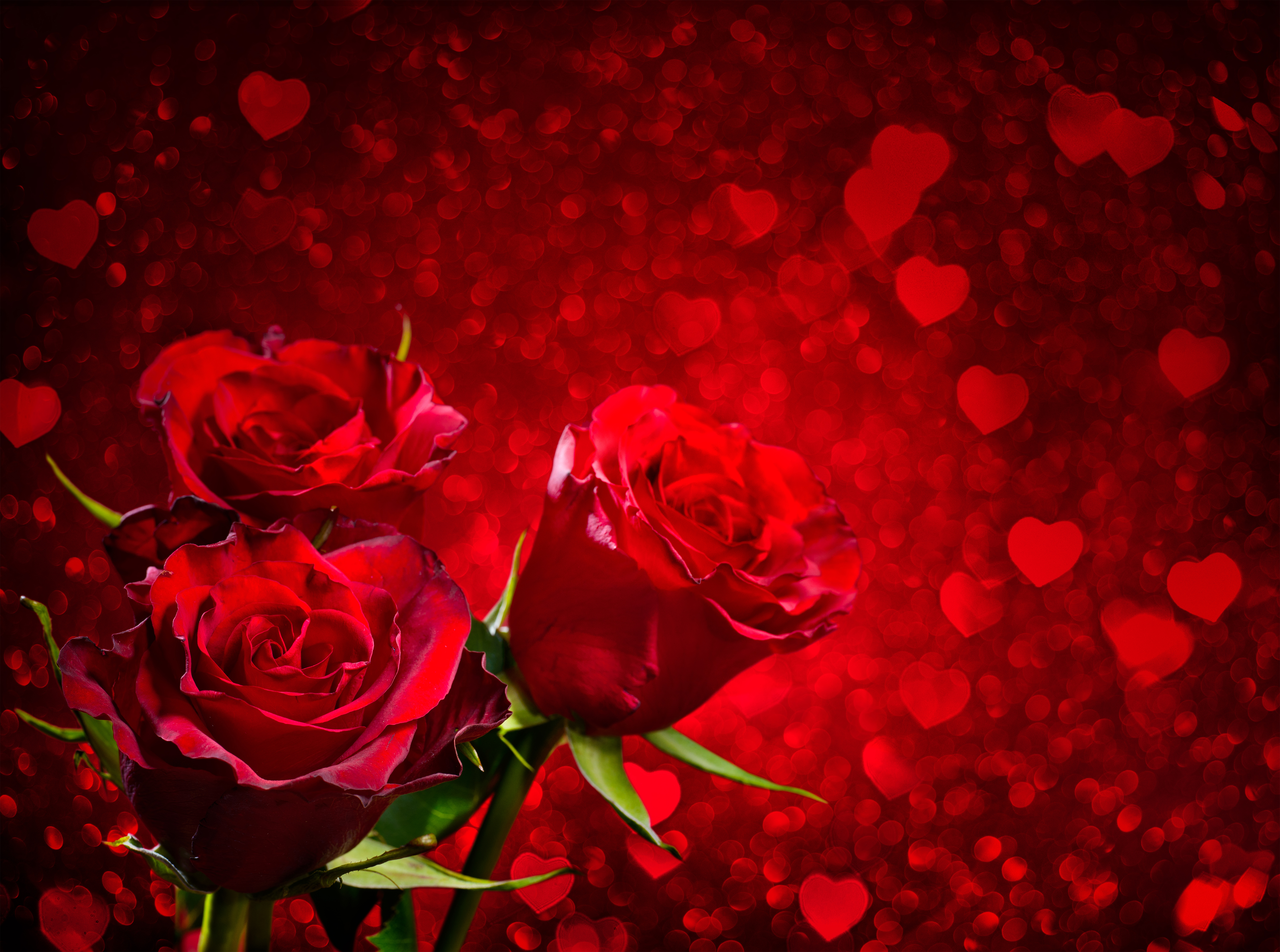 heart and roses background - photo #3