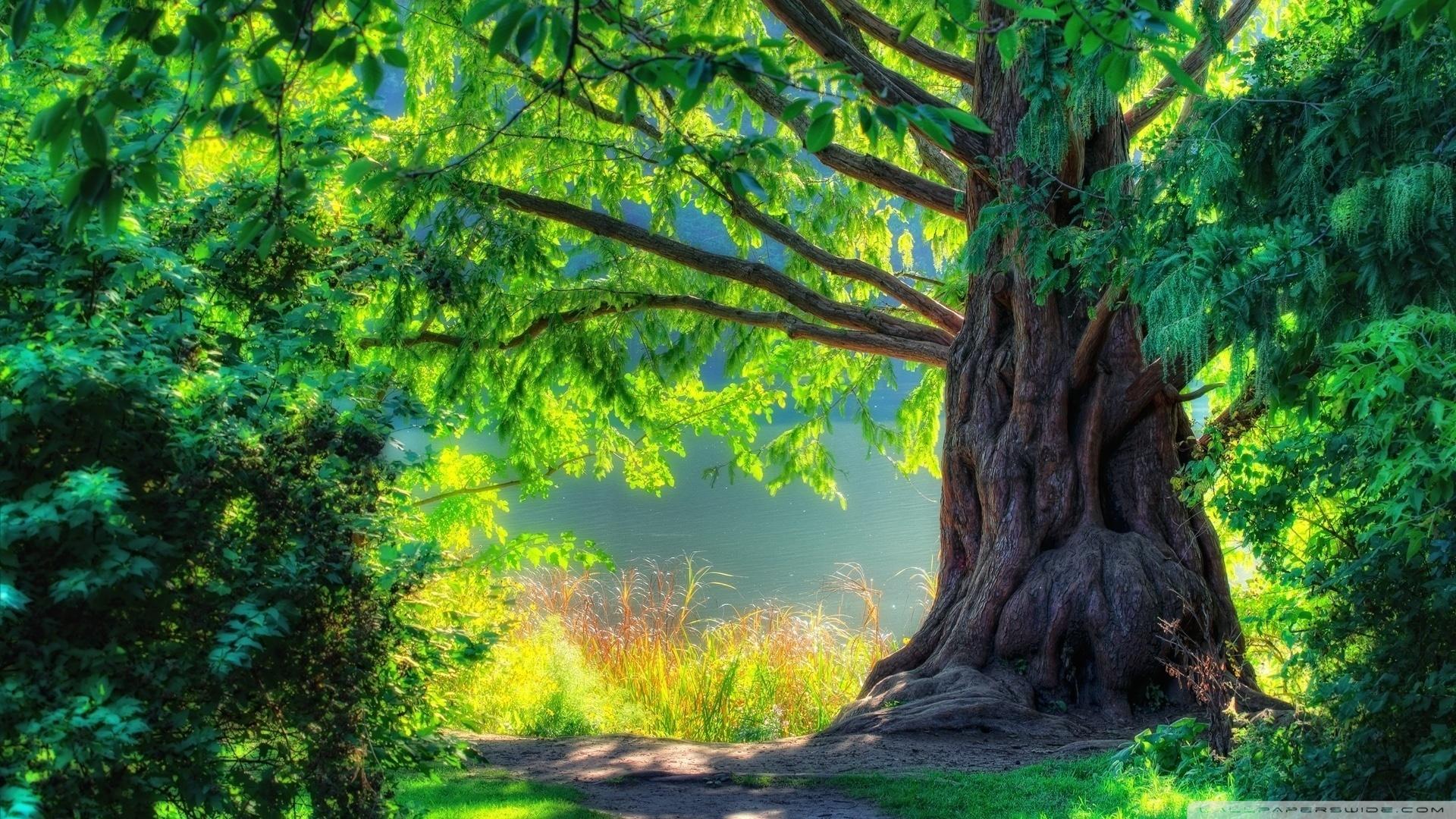 wallpaper primavara viata imagini curiozitati beautiful tree 1920x1080