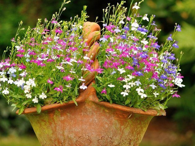 nature flowers flowers in a basket 630x473