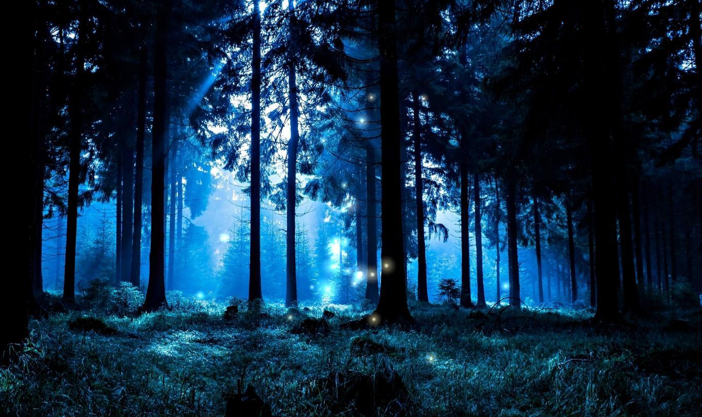 Free Download Night Forest Hd Live Wallpaper Screenshot