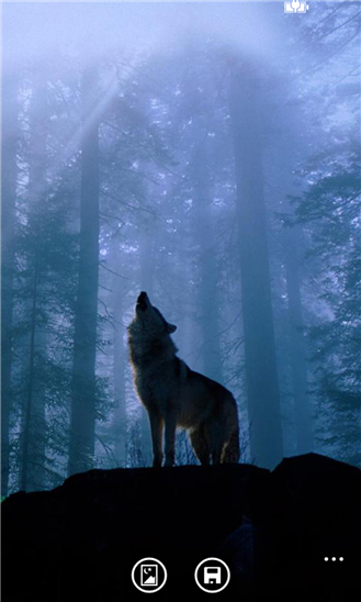 Wolf Wallpaper HD indir 329x548