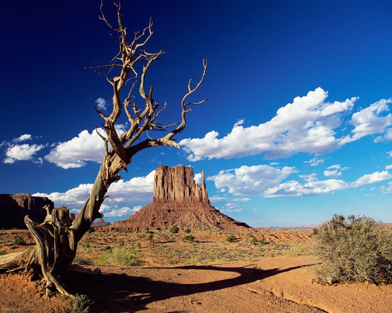 Western Tree 1280x1024 pixels Wallpapers tagged Landscape 1280x1024