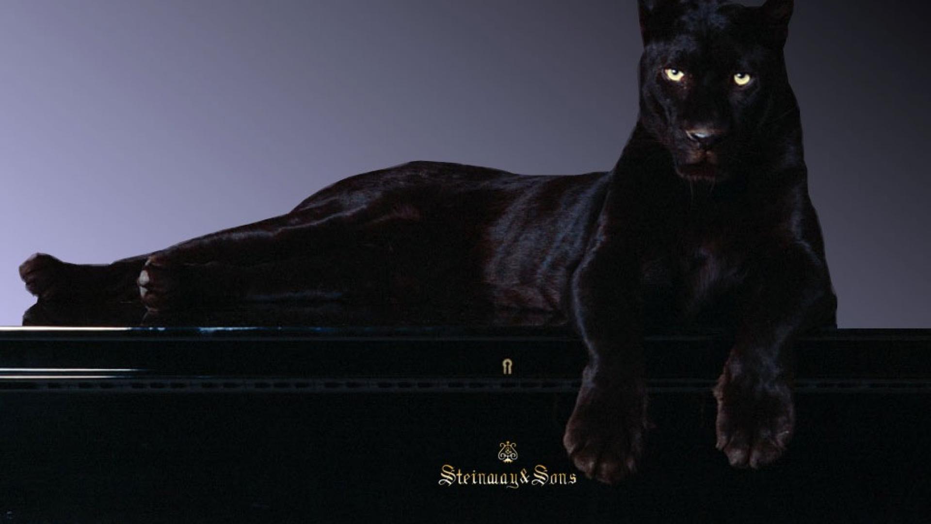 Black Panther wallpaper 1920x1080 45761 1920x1080