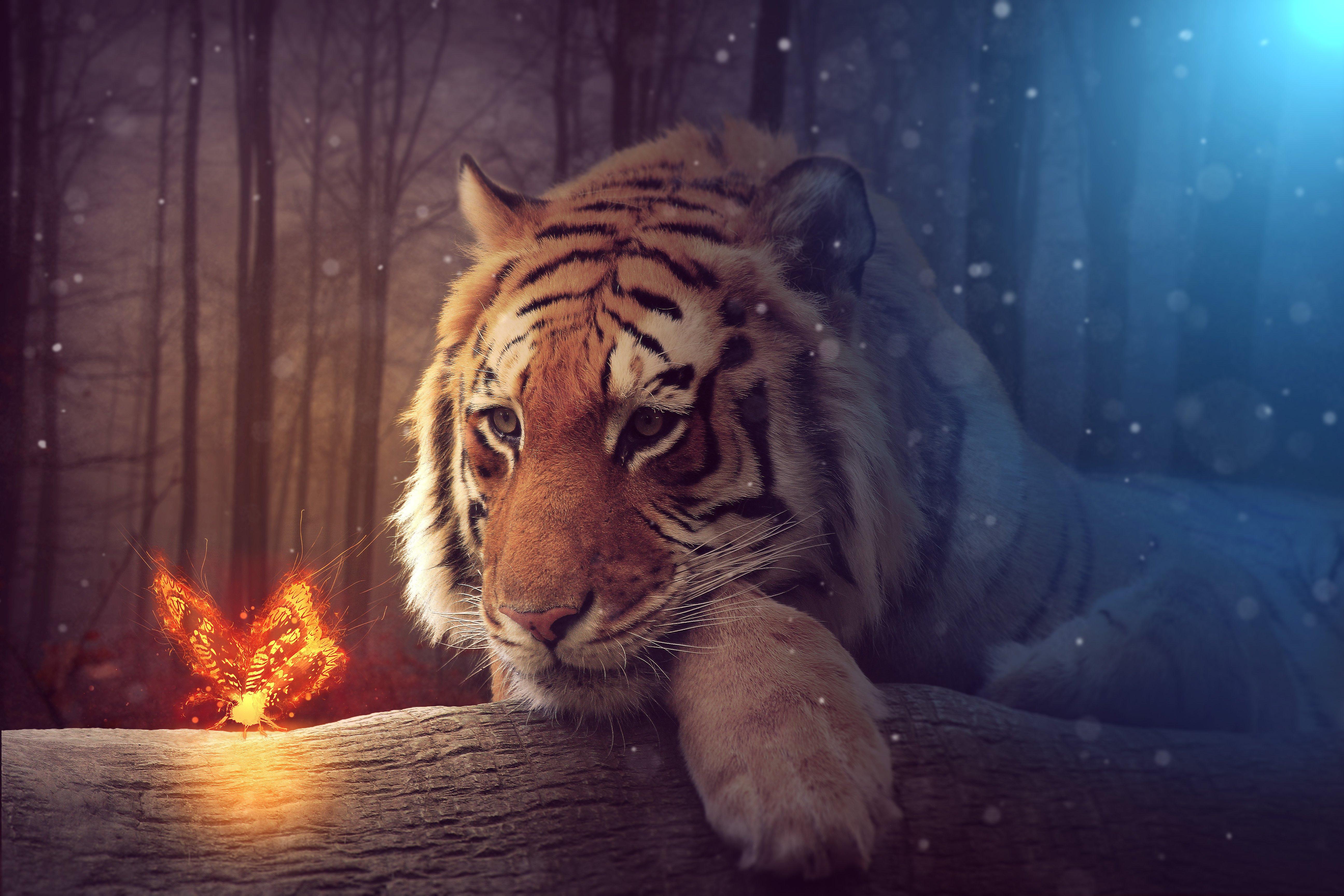 Tiger 4k Ultra HD Wallpaper Background Image 5184x3456 5184x3456