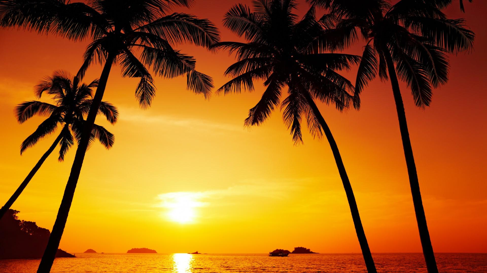 Palm trees Wallpaper beautiful scenery sunset Chang island 1920x1080