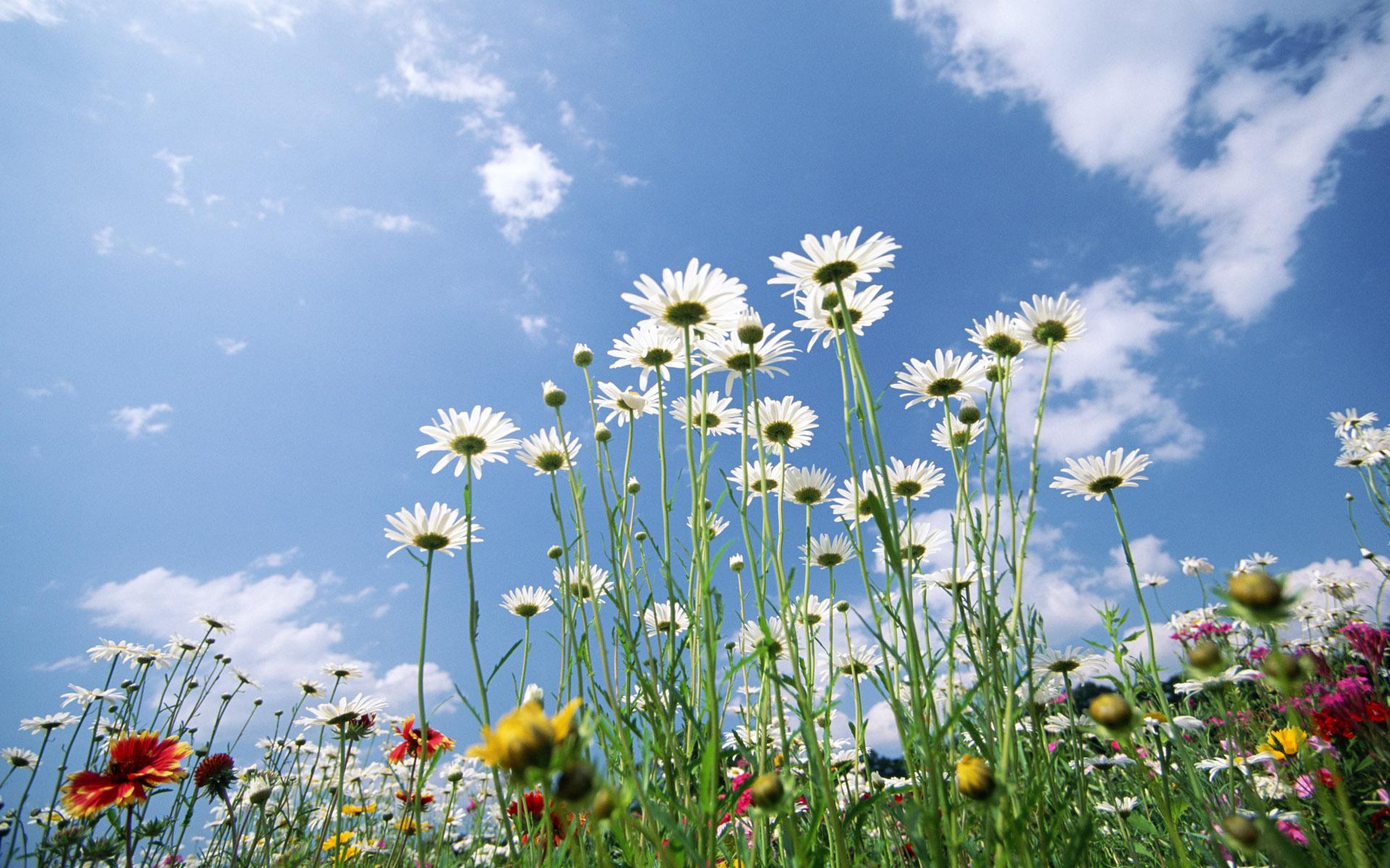 Flowers Sky wallpaper   674241 1920x1200