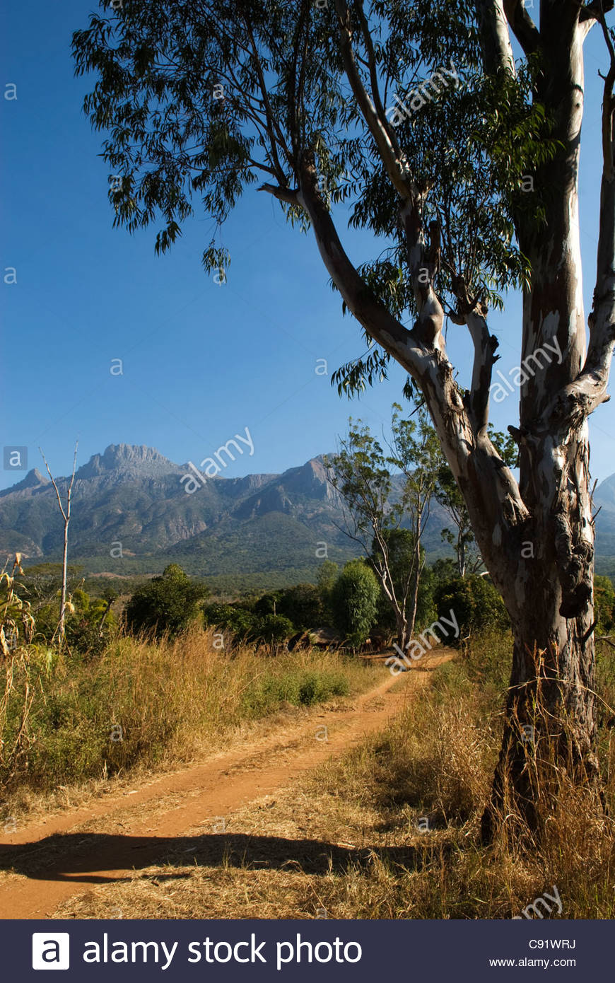 Mulanje Mountain Stock Photos Mulanje Mountain Stock Images   Alamy 870x1390