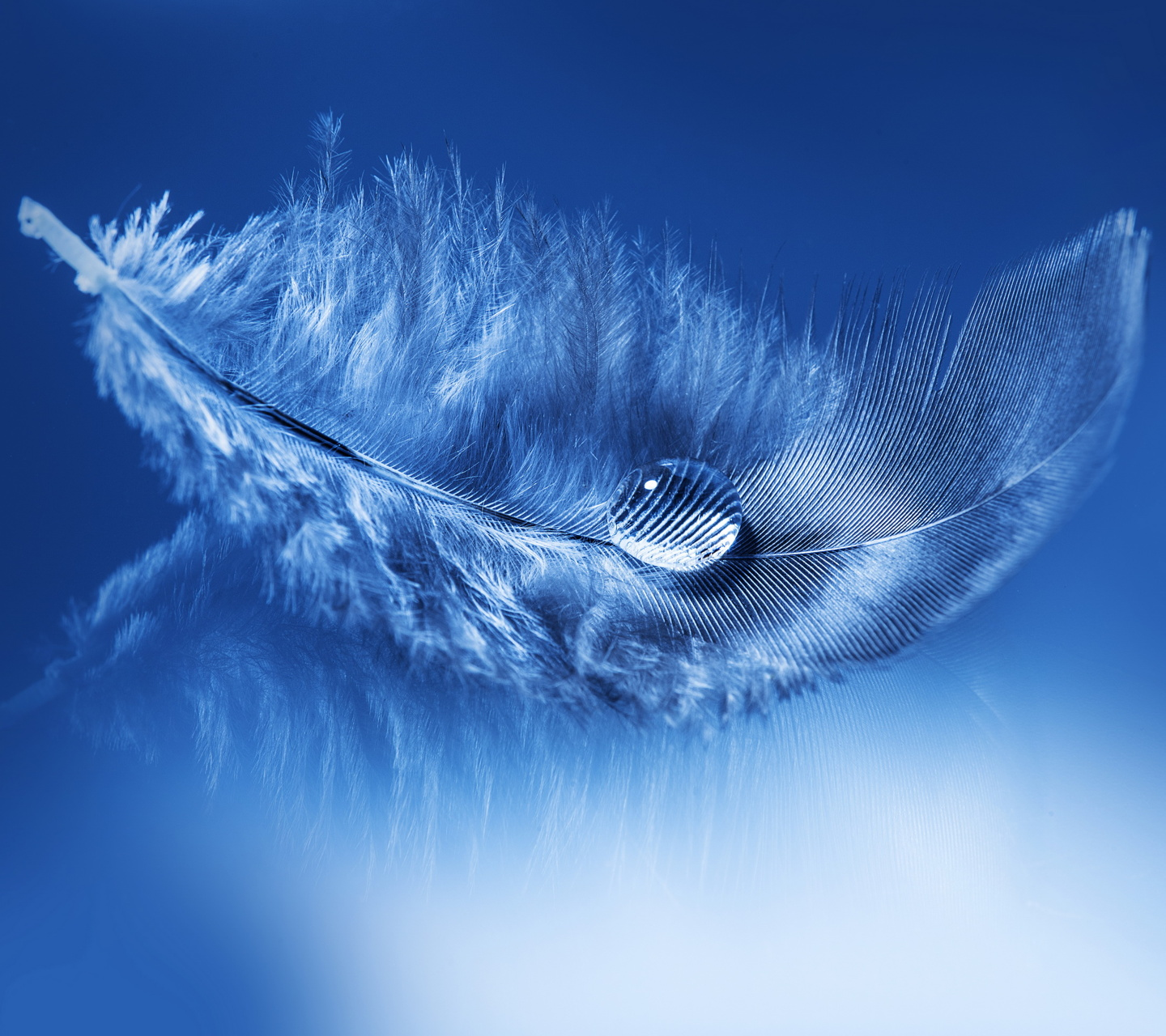 Download Feather   Daily new wallpapers 1440x1280