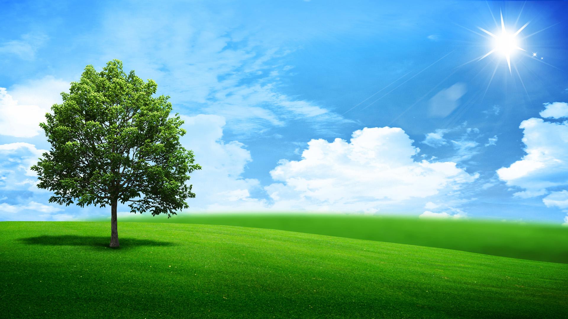 natural nature oak outdoor panorama pasture season sky spring 1920x1080