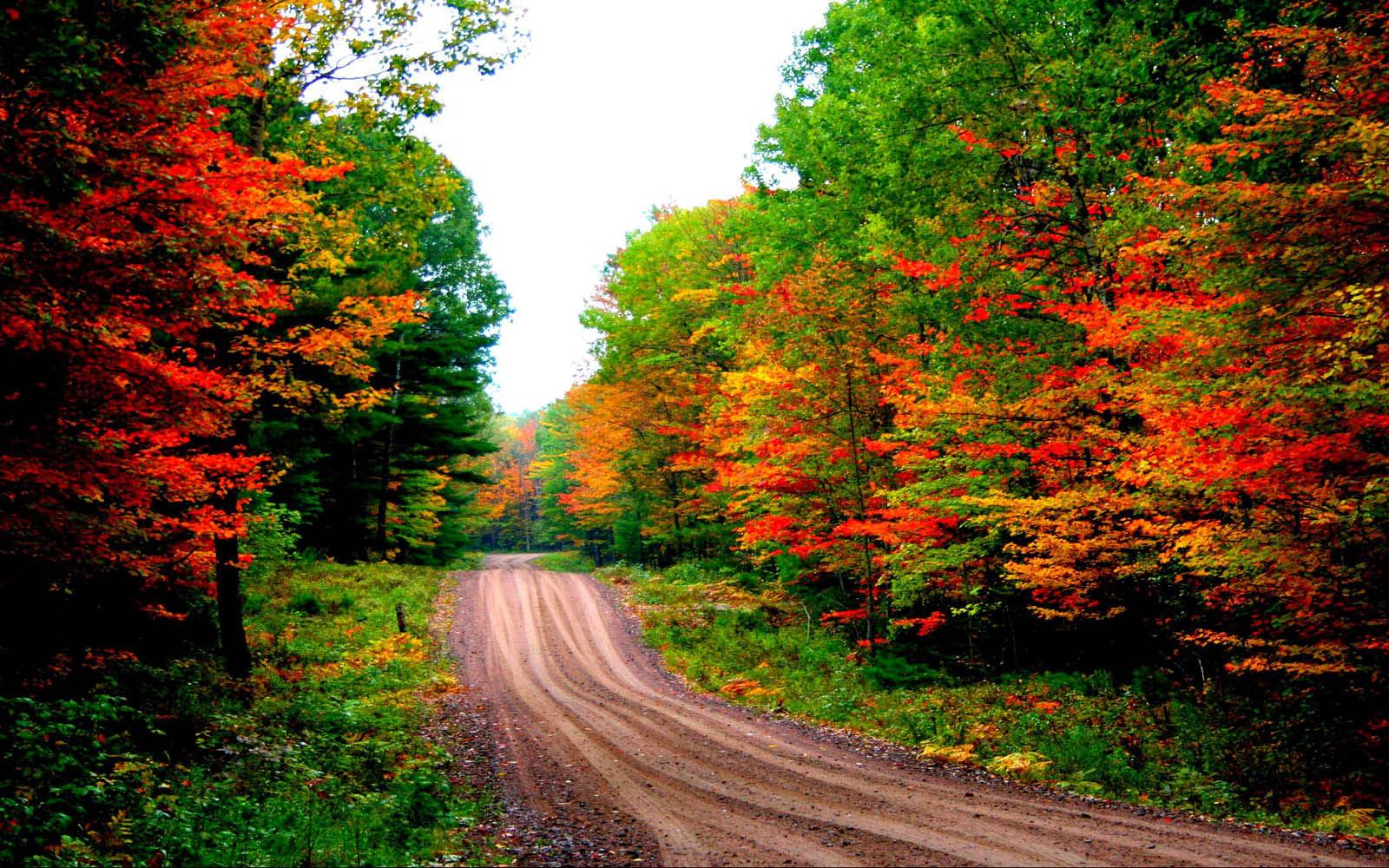 Autumn Road Wallpaper 7018495