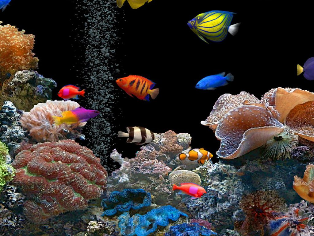 Hd tropical fish wallpaper wallpapersafari for Desktop fish tank
