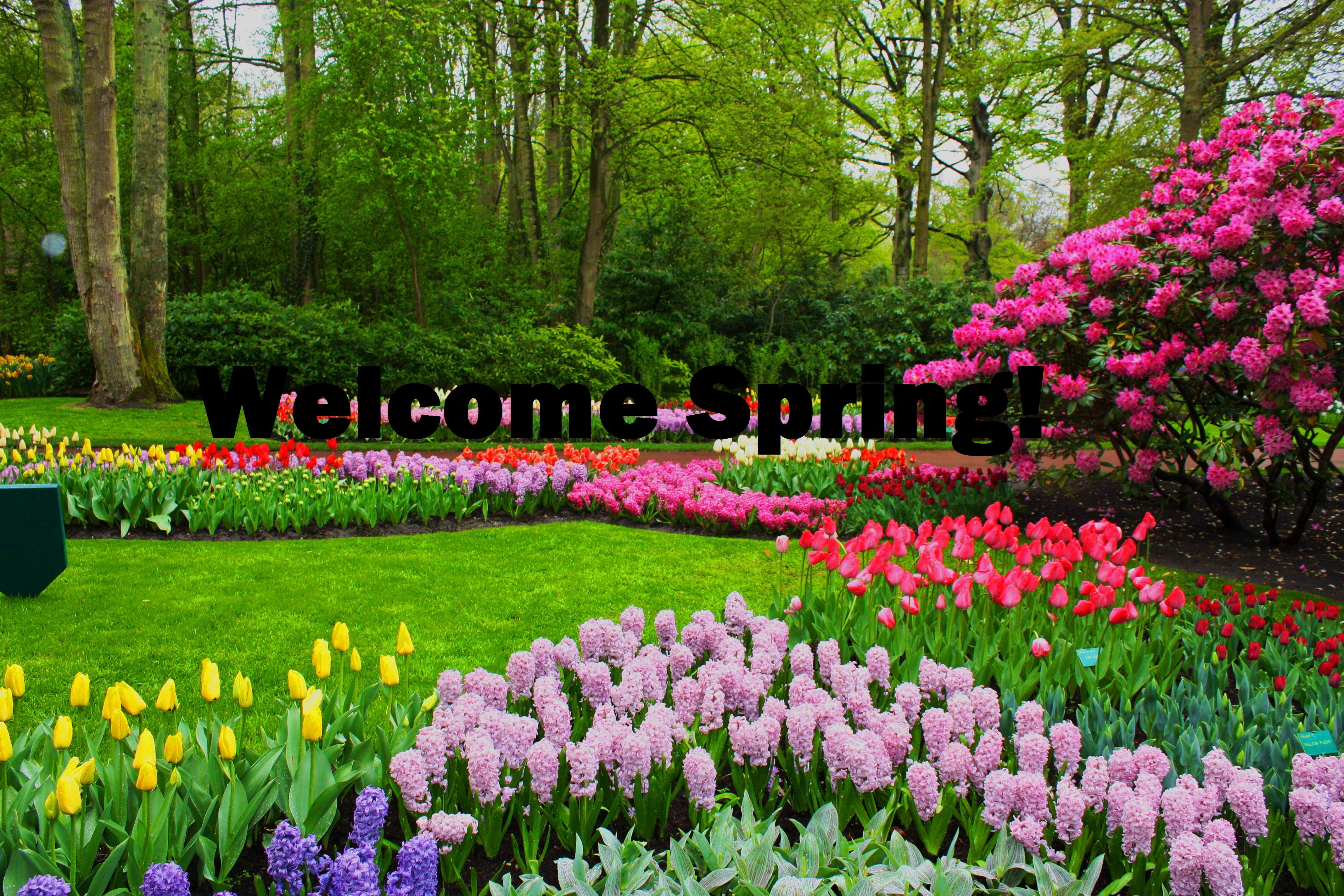 Pics Photos   Funny Spring Hd Wallpapers 1024x640 Jpg 4272x2848