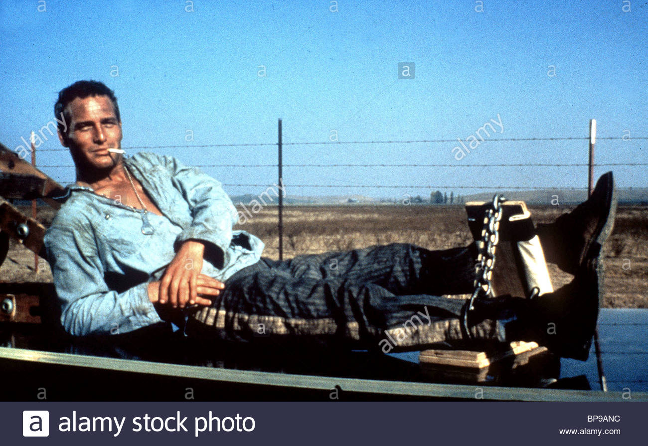 Cool Hand Luke Paul Newman High Resolution Stock Photography and 1300x895