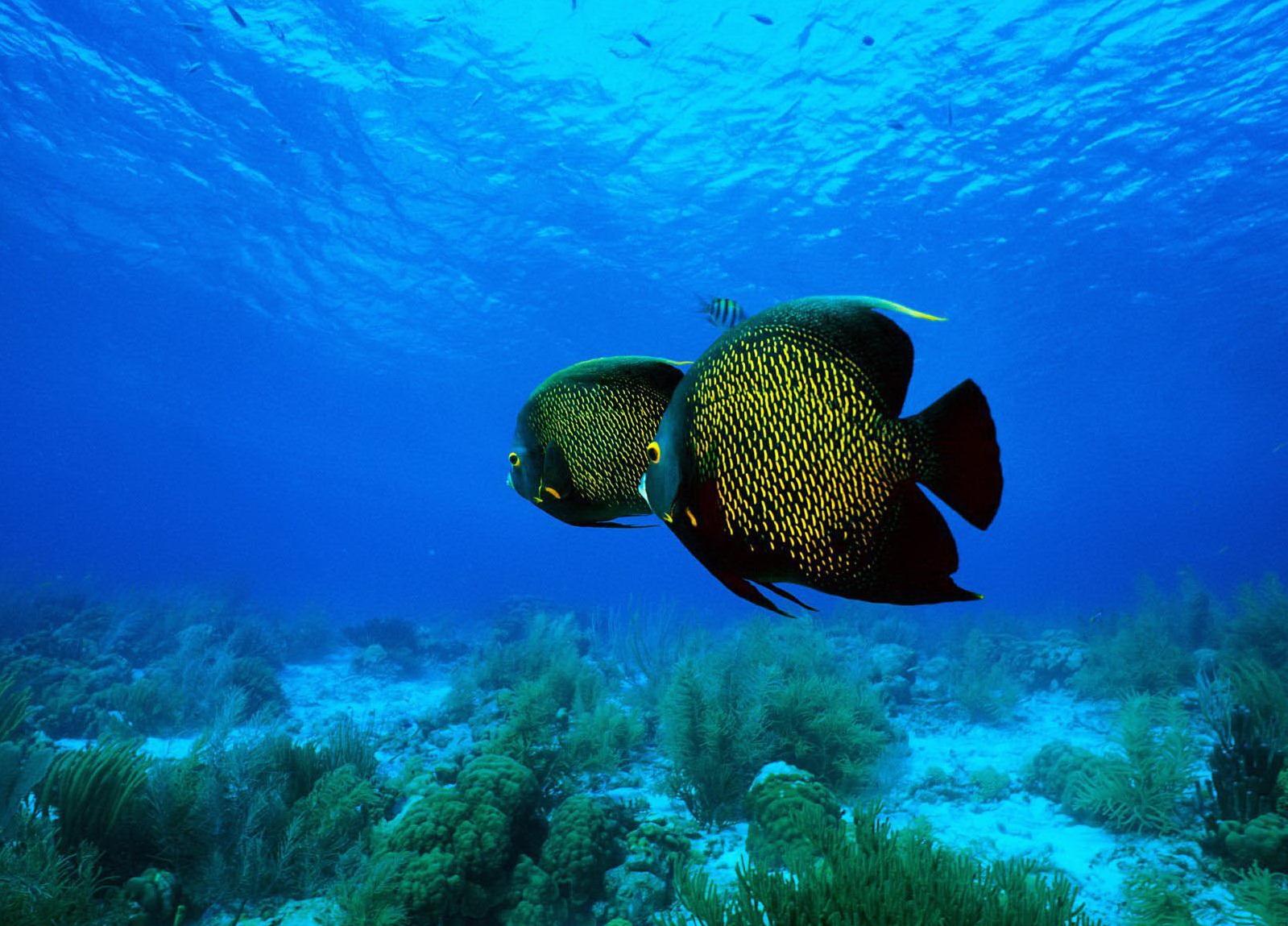 116451 ocean life wallpaper ocean life wallpaper wallpapers 1600x1200 1599x1149