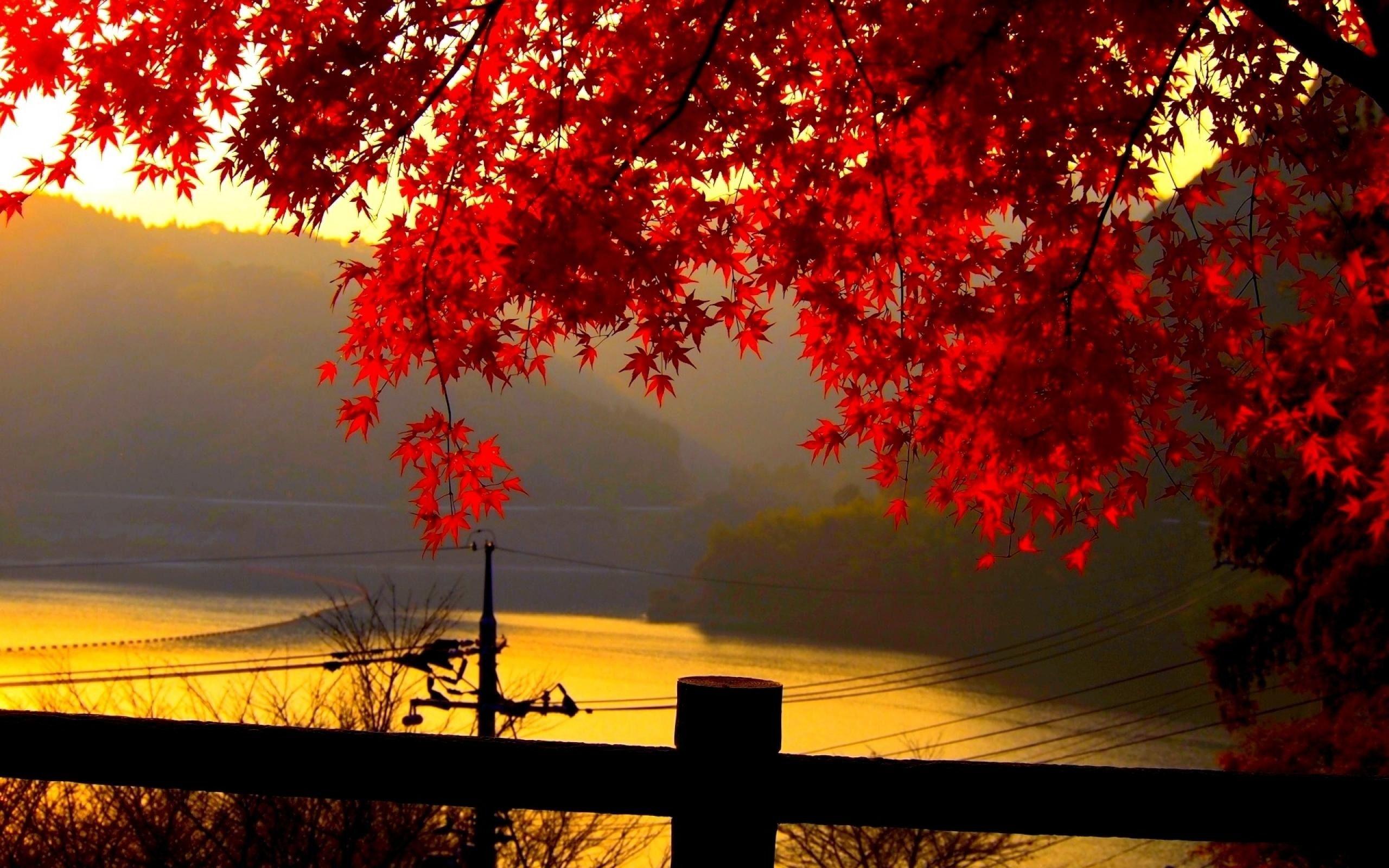 Autumn Landscape Wallpapers HD 27777 Wallpaper Download HD 2560x1600