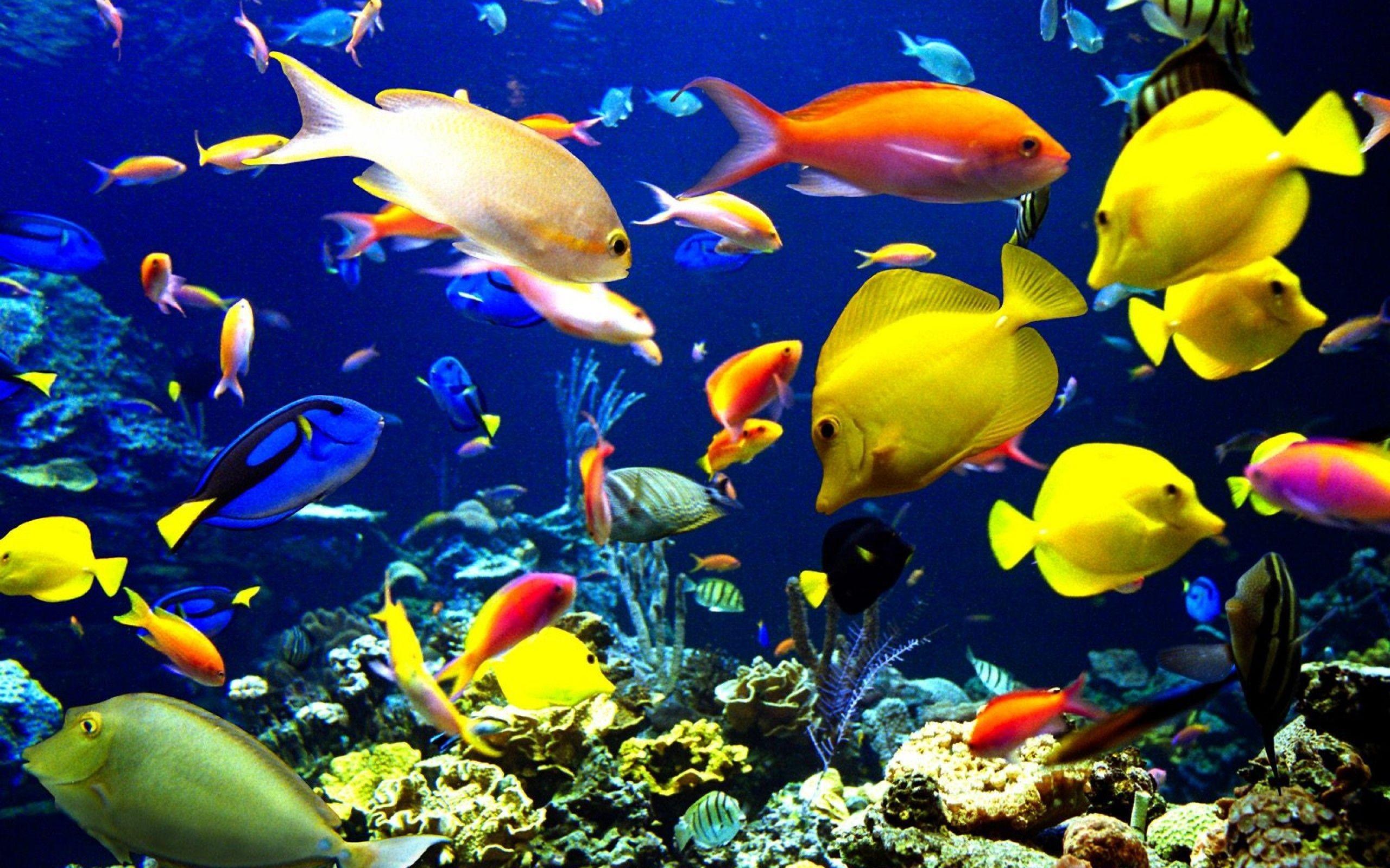 Ocean life wallpaper hd wallpapersafari for Sea water fish