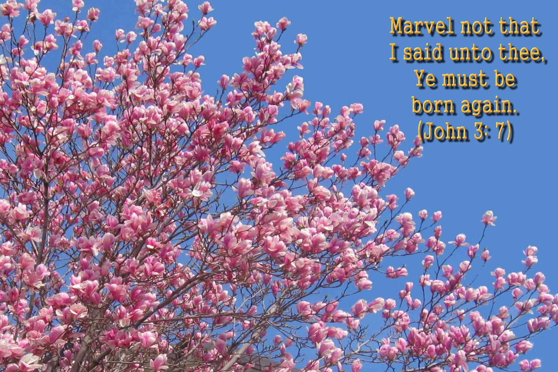 48 Spring Wallpaper With Bible Verses On Wallpapersafari