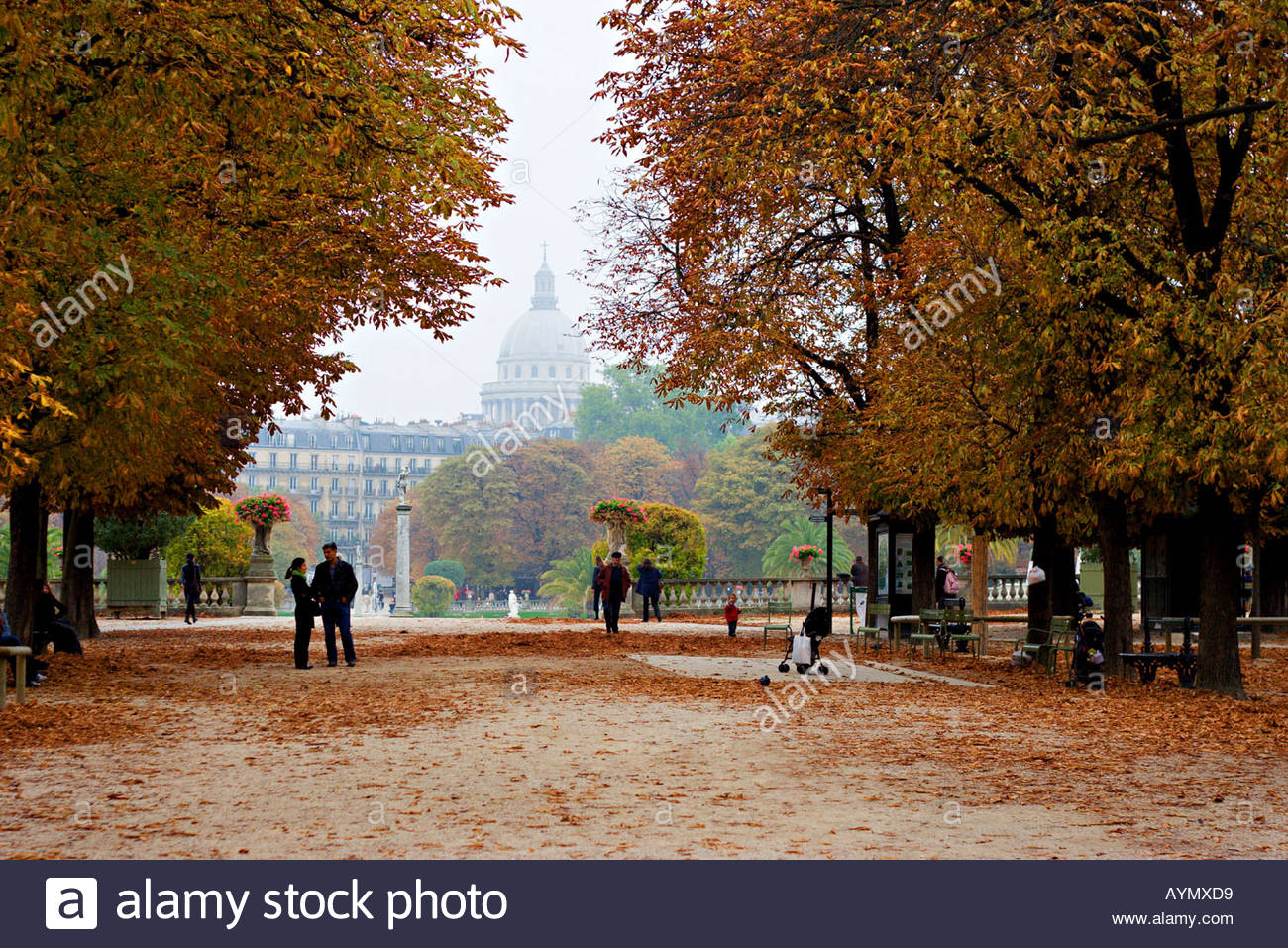 Autumn leaves in Jardin du Luxembourg with the Pantheon in the 1300x957