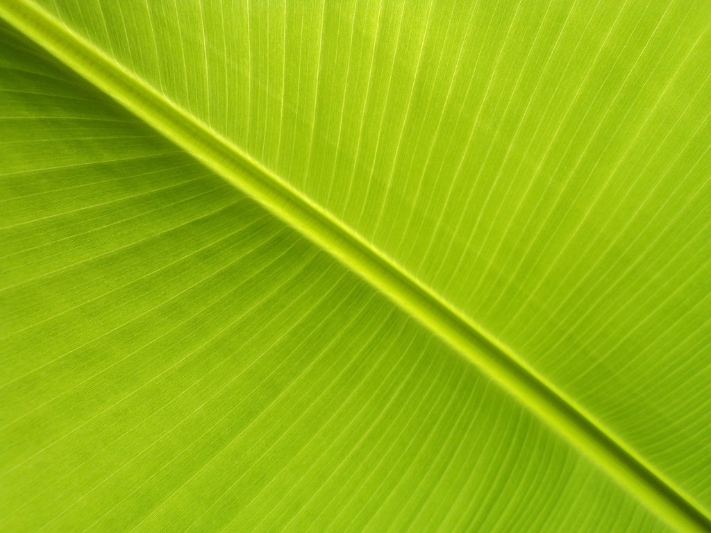 Banana Leaf II by LukasB86 1024x768