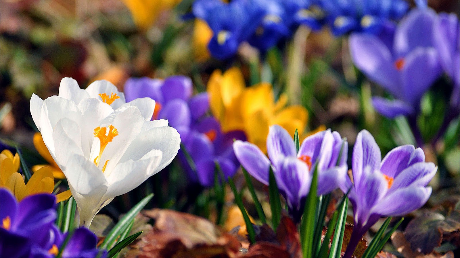 Best top desktop spring wallpapers hd spring wallpaper backg 1600x900