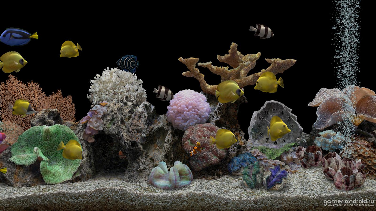 Обои аквариум на рабочий стол скачать