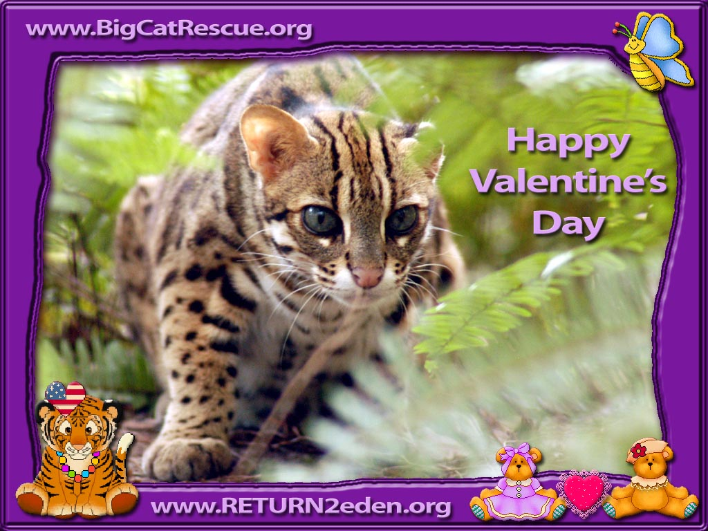 cat valentine wallpaper 181 Cat Valentine Wallpaper 1024x768