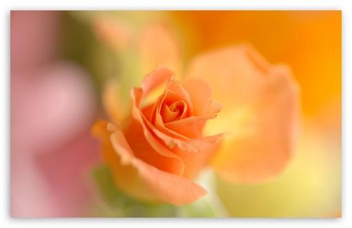 Thank You For All My Friends HD desktop wallpaper High Definition 510x330