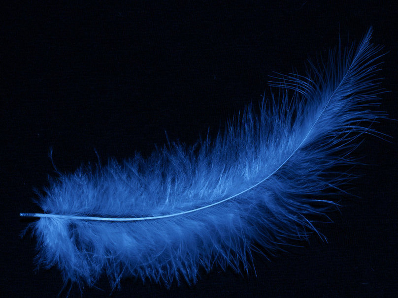 blue feather wallpaper forwallpaper blue feather wallpaper 808x606