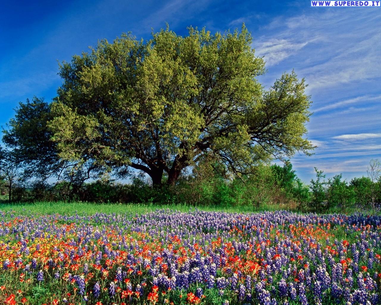 Immagini Alberi 67 Immagini in alta definizione HD 1280x1024