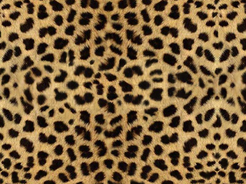 Animal Print Backgrounds 800x600