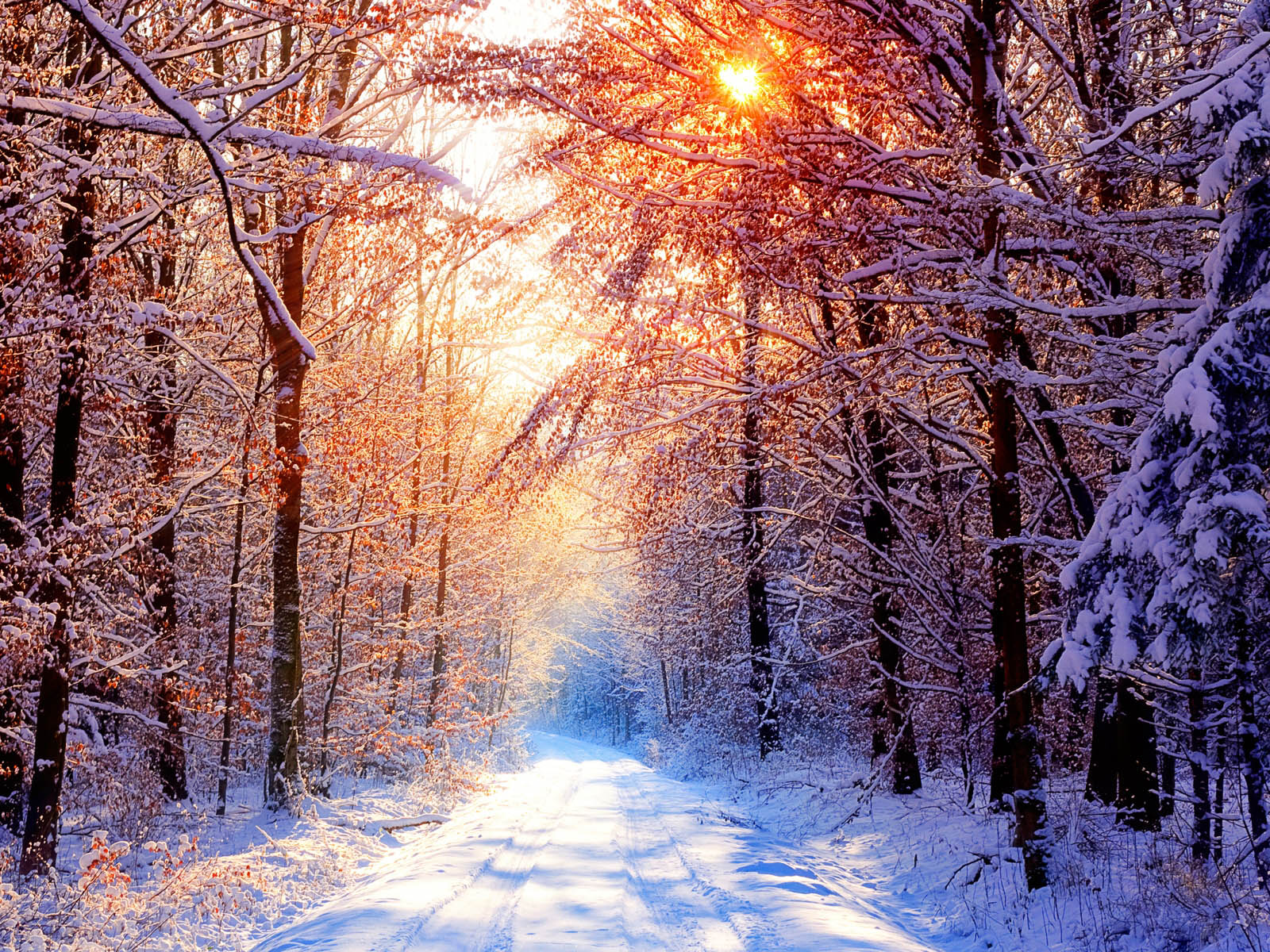 Winter Desktop Wallpapers and Backgrounds Wallpaper 1600x1200