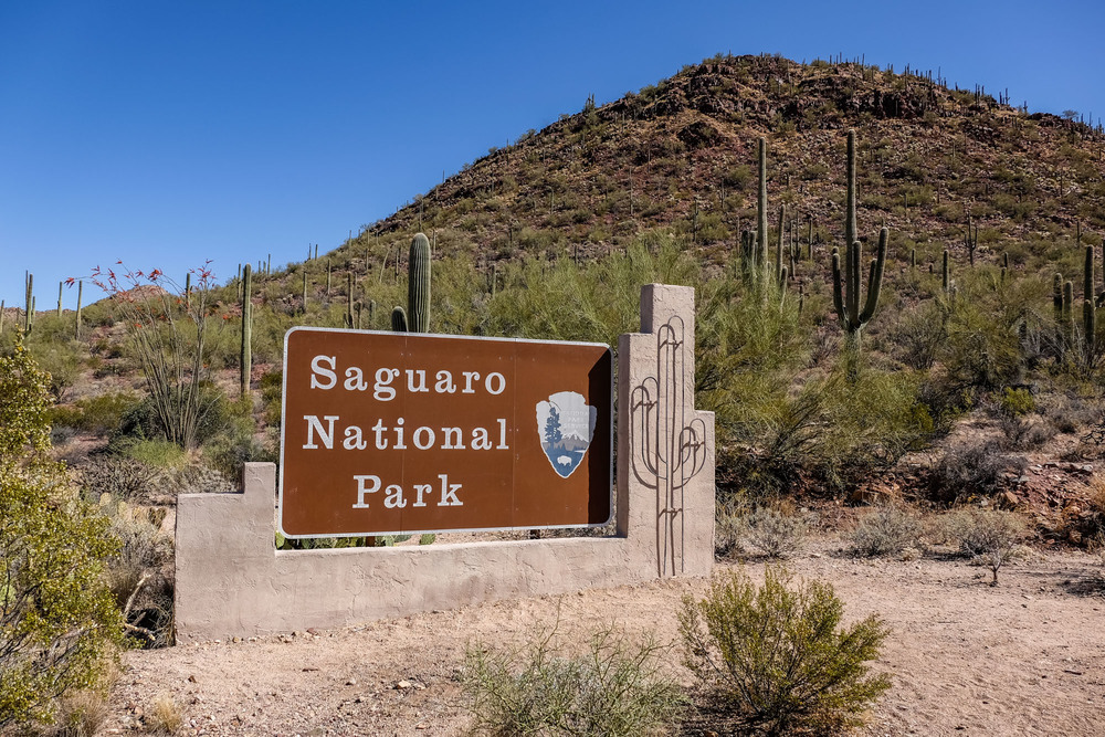 Saguaro National Park The Greatest American Road Trip 1000x667