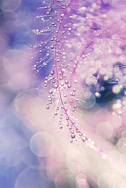 Water Drops Purple Color Macro Photography Raindrop Dewdrops Dew 401x600