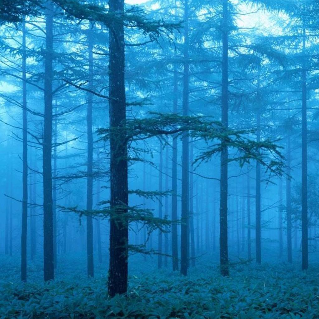 Foggy forest iPad Backgrounds Best iPad Wallpaper Wallpaper 1024x1024