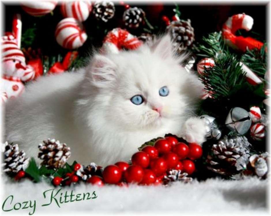 Cute Christmas Kitten Wallpapers Christian Wallpapers 940x750
