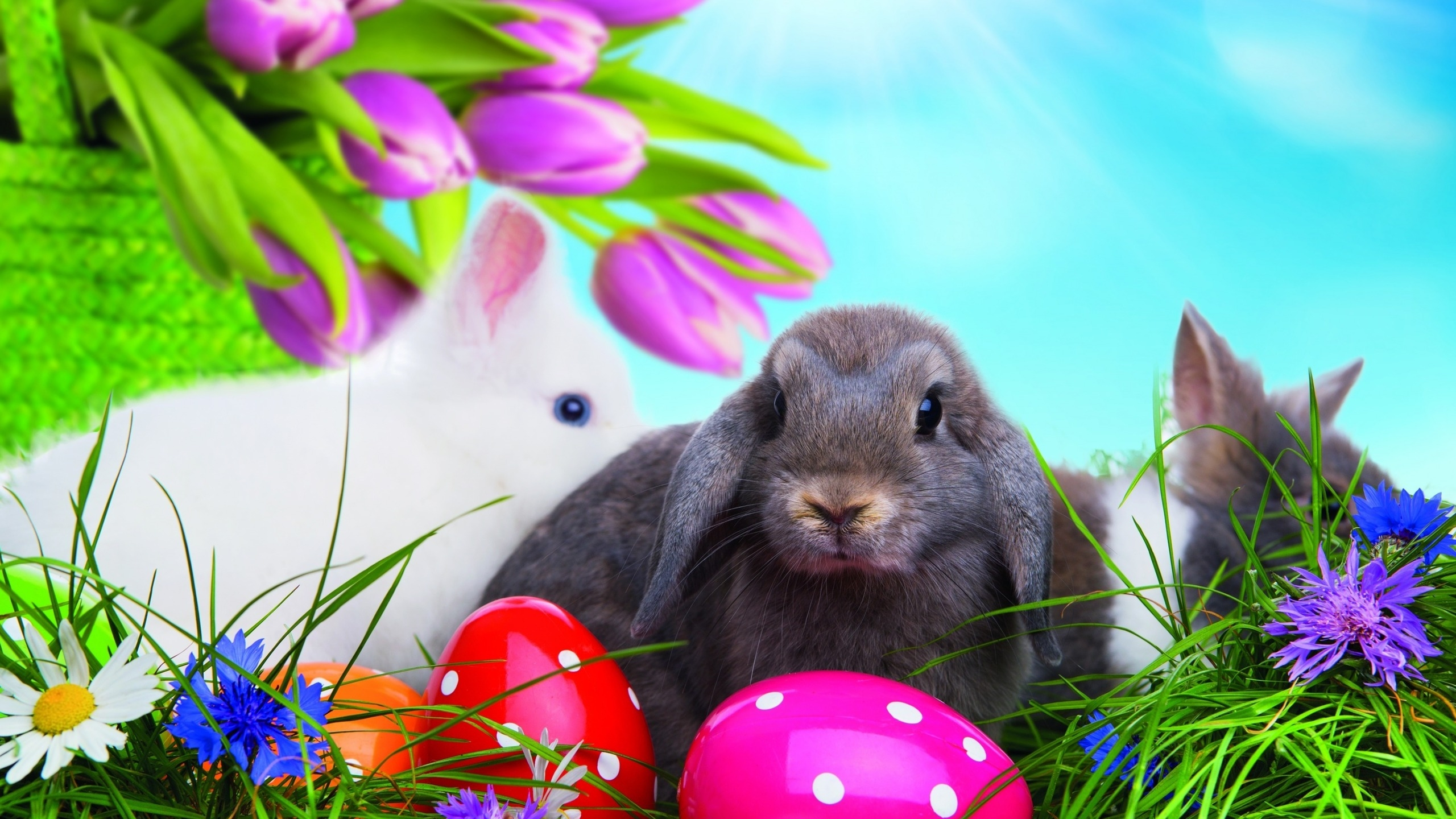 Easter Bunny HD Wallpaper   WallpaperFX 2560x1440