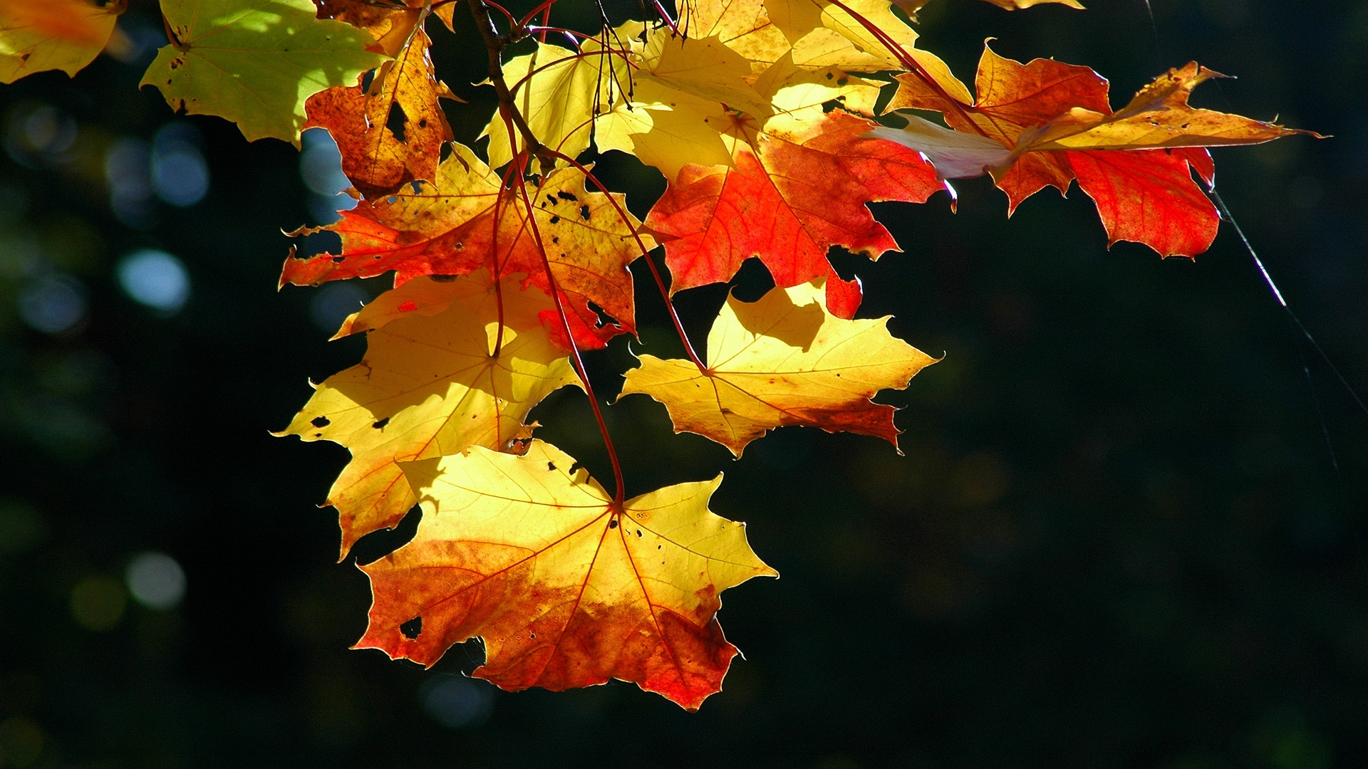 wwwhawaiidermatologycomfallfall leaves desktop wallpaperhtm 1920x1080