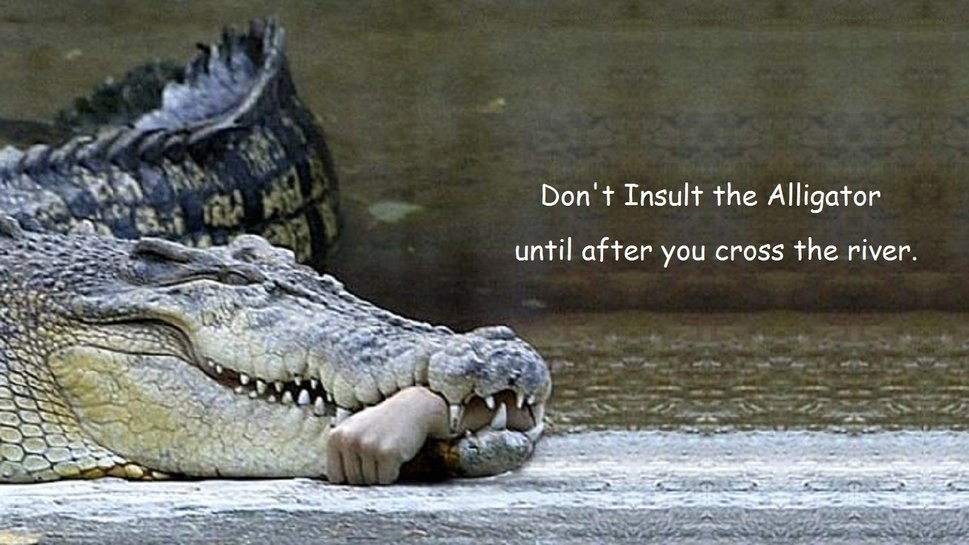 Dont Insult The Alligator wallpaper   ForWallpapercom 969x545