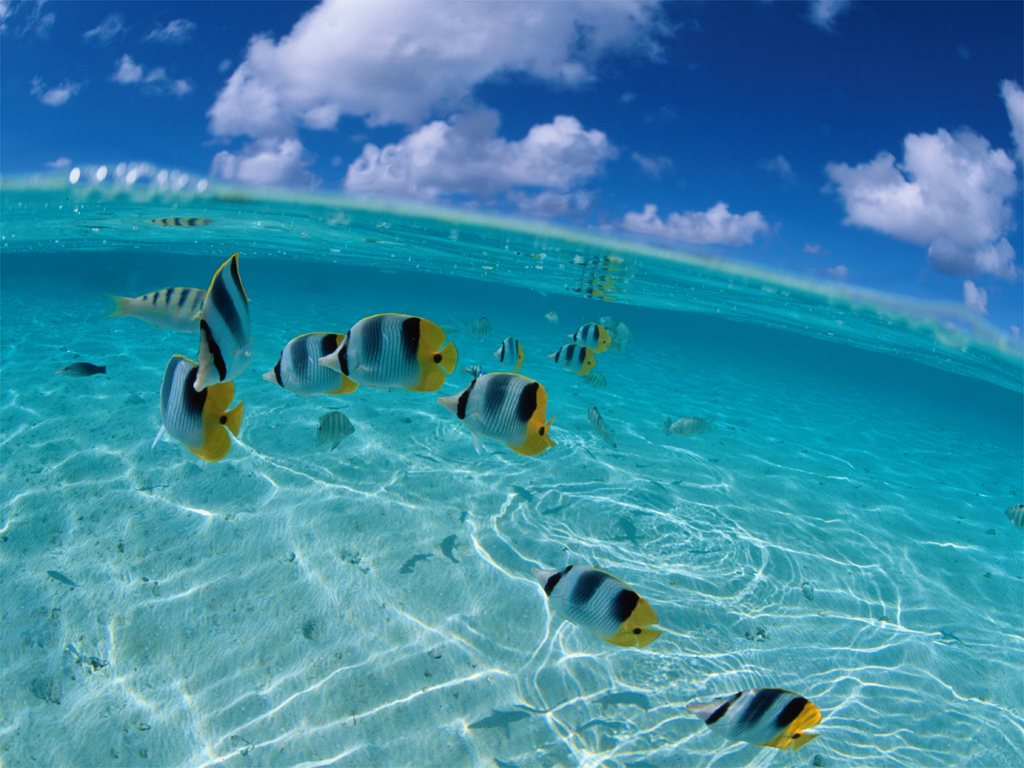 Wallpapers School of Tropical Fish Desktop Wallpapers School of 1024x768