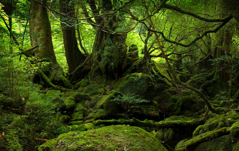 1372 Category Nature Hd Wallpapers Subcategory Forests Hd Wallpapers 800x505