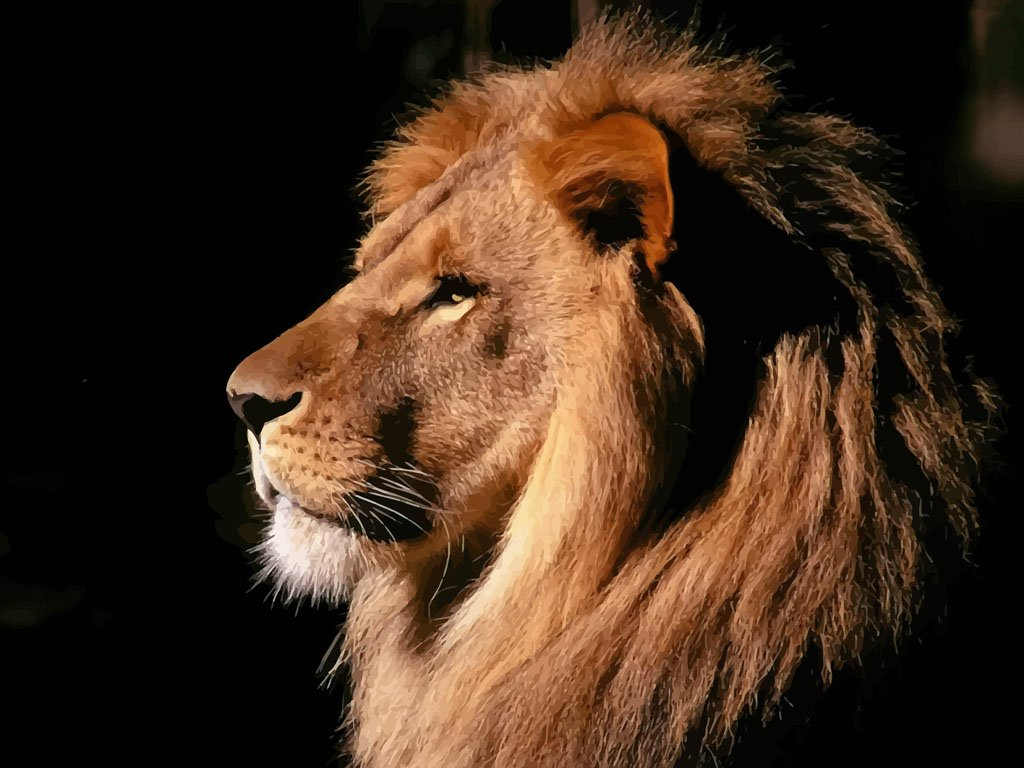 Lion Head Wallpaper 1024x768