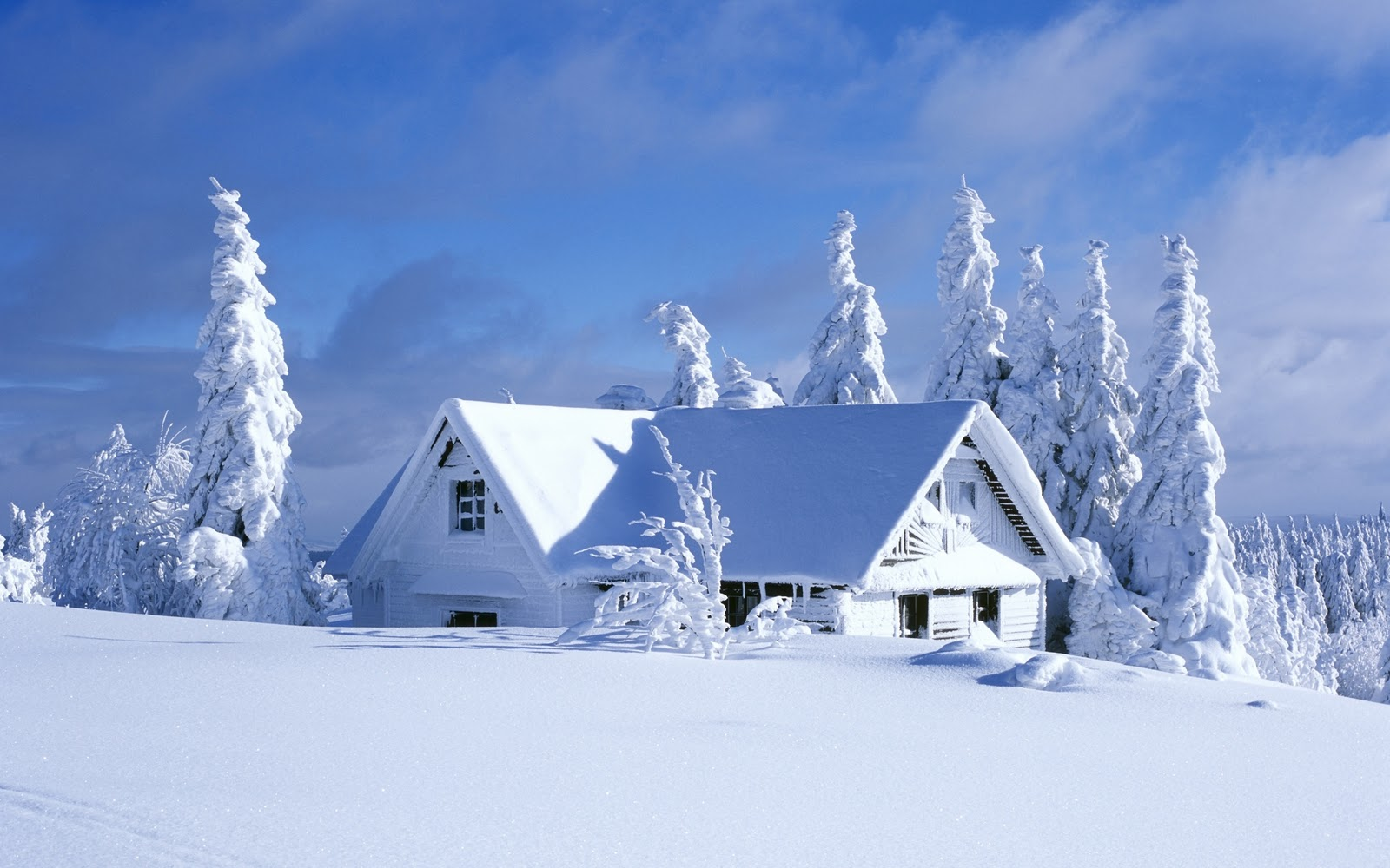 Winter Scene Poster Wallpaper Art Zeromin0 1600x1000