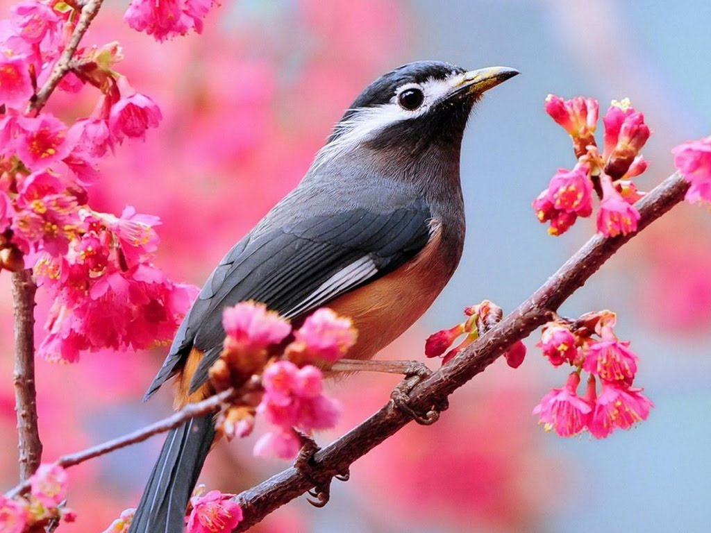 Beautiful Birds Wallpapers   Birds Desktop Wallpapers Wallpaper Zone 1024x768