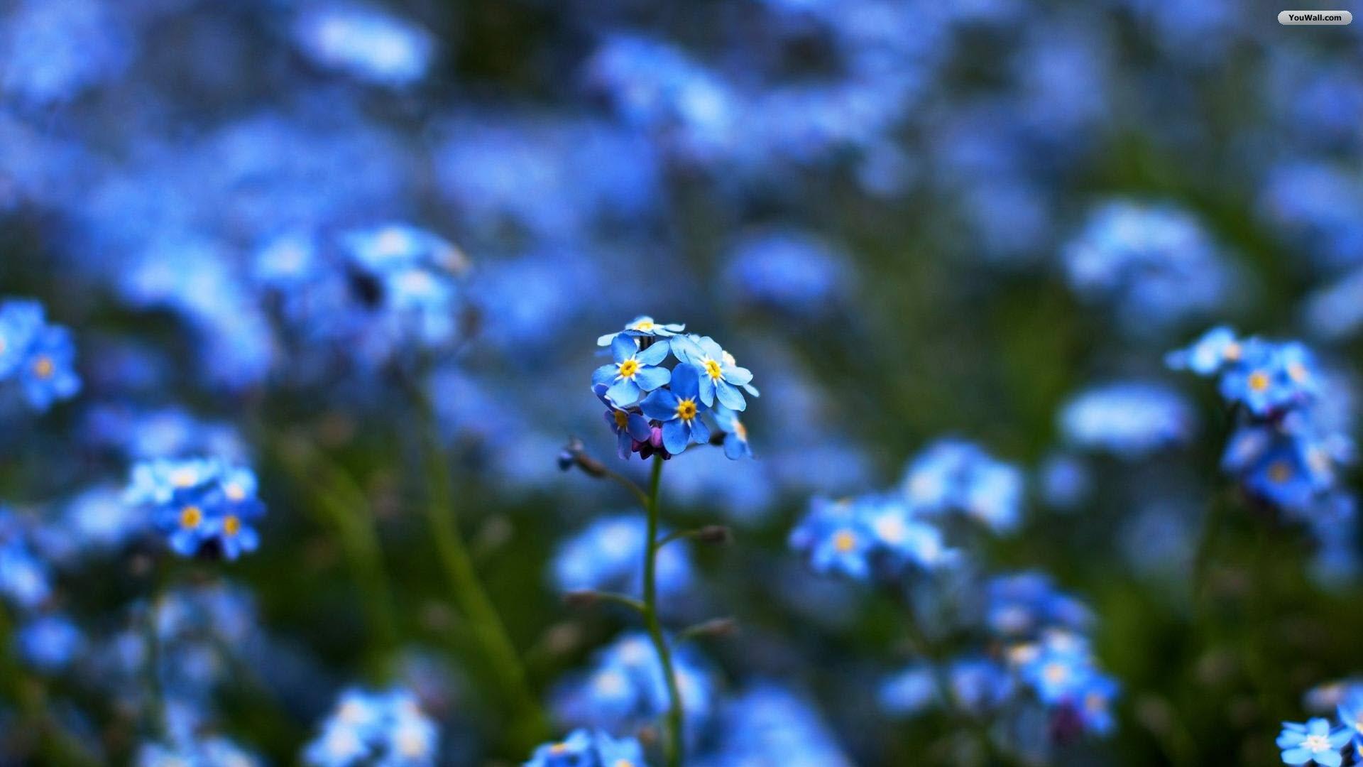 74 Blue Flowers Wallpaper On Wallpapersafari
