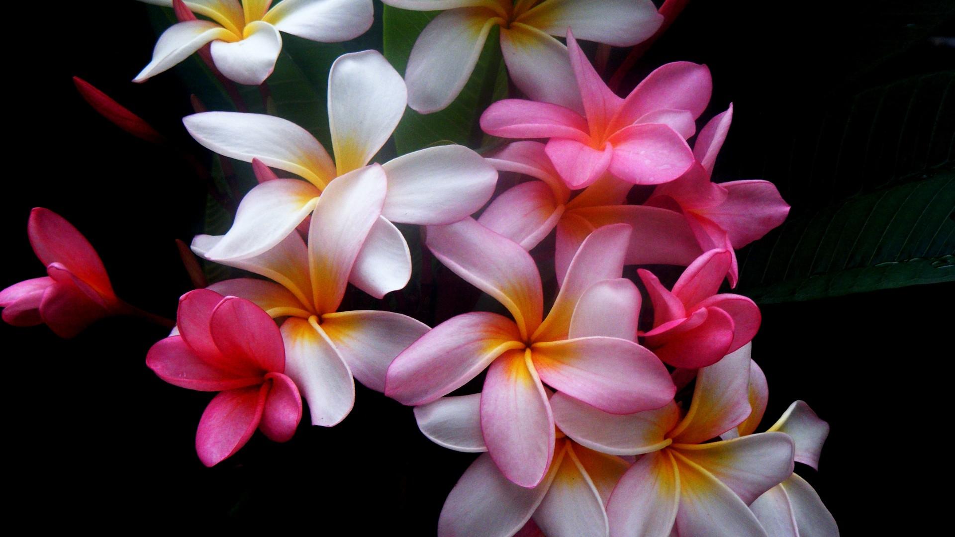 1920x1080 Beautiful flowers desktop PC and Mac wallpaper 1920x1080