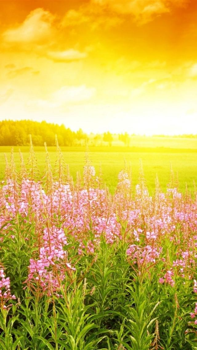 summer day backgrounds for iphone 5 640x1136 hd iphone 5 wallpaper 640x1136